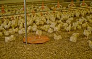Control broiler houses from one system