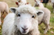 Deficiency of Vitamins: Diseases and Reduced Performance in Animals