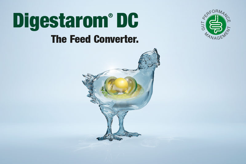 BIOMIN SUBMITS EU DOSSIER FOR DIGESTAROM® DC AS ZOOTECHNICAL FEED ADDITIVE IN BROILERS