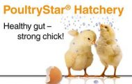 BIOMIN LAUNCHES POULTRYSTAR® HATCHERY GEL DROP SYNBIOTIC FOR DAY OLD CHICKS