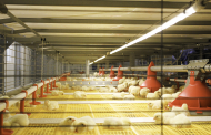 Complete solutions for poultry production