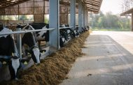 Better rumen function critical for milk solids and milk value this winter