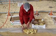 Researchers present results of a project for improved animal welfare in poultry production