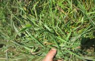 BARR-AG LTD.:  GROWING 37,000 ACRES OF FORAGE CROPS, CEREAL CROPS AND OIL SEEDS