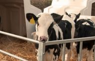 Teat Dips - An essential step in the milking process