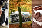 FrieslandCampina joins forces to reduce emission from Dutch cows