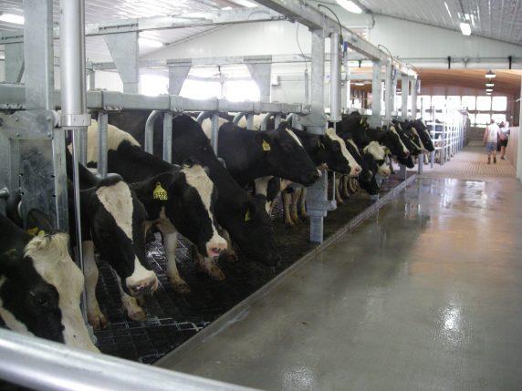 Larson Acres: Milk Makes family Stronger