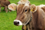 Myco-Marker®: Evaluate the Risk AND measure the Exposure of Mycotoxins in Animals