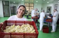 Sustainable hatchery BIO Furstenhof hatches first HatchCare chicks
