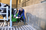 CowSignals® Cuddle Box- Use the power of nature: stress-free calving for cow, calf and farmer