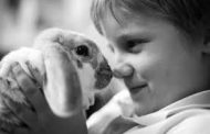 MSD Animal Health Launches NOBIVAC® Myxo-RHD PLUS Vaccine for Pet Rabbits in Europe