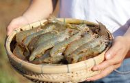 Bayer Animal Health brings more technologies to warm-water aquaculture