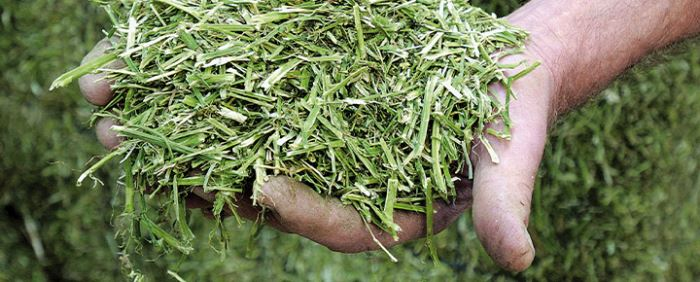 ForFarmers partner in research program on sustainable production of grass and forage crops