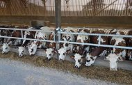 Dairy cows—we owe it all to them