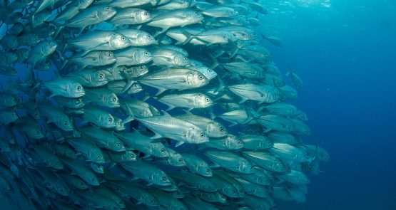 Orffa is taking next steps in being partner to the Aquaculture segment