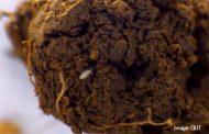 MLA Science Forum seeks solutions to pasture dieback