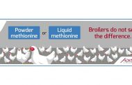 LIQUID OR POWDER METHIONINE: MORE THAN 1 MILLION BROILERS DO NOT SEE THE DIFFERENCE!