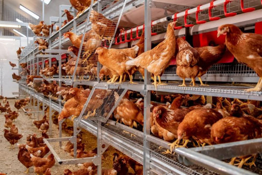 VDL takes over Jansen Poultry Equipment