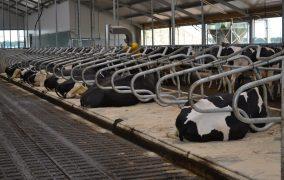 Meadow Next cow mattress: durable matting
