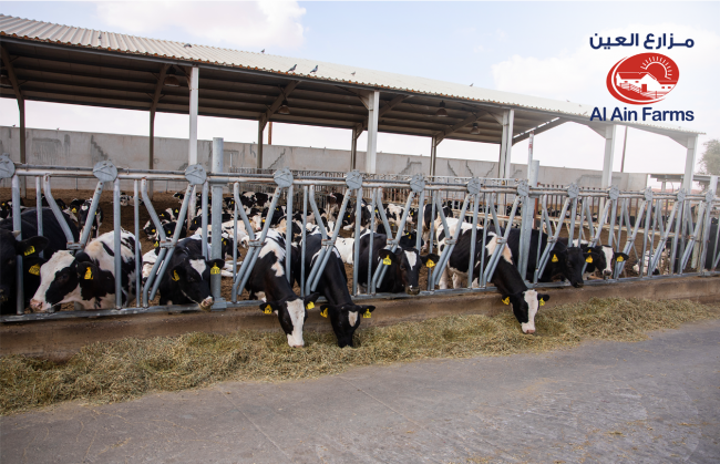 Al Ain Farms Hosts First Ever Bovine Competition in the UAE