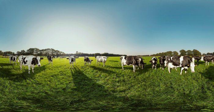 FrieslandCampina outdoor grazing figures 2020 known