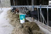 Inflammation: The threat to profitability and animal welfare