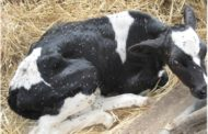 Biosafety in livestock facilities, the road to efficient productivity