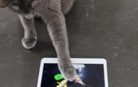 Friskies® Brings More Feline Fun with the Reboot of Cat Fishing 2, a Game Designed Especially for Cats