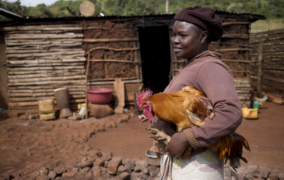 Prevent project to boost prospects for 150,000 backyard poultry producers in Africa
