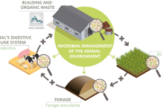 MANURE PRO: microbial-based solution to help manage the microbial environment of beddings and manure