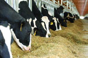 Adisseo Bringing New Innovations to European Ruminant Market