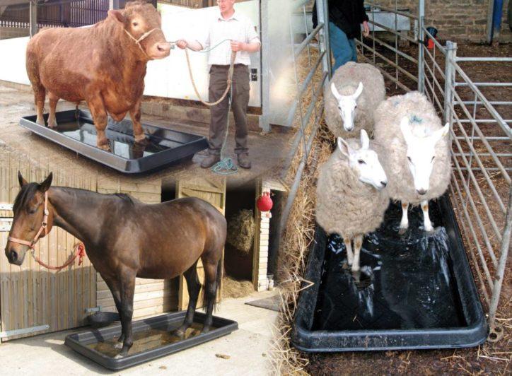 Paxton's footbaths help prevent harmful bacteria