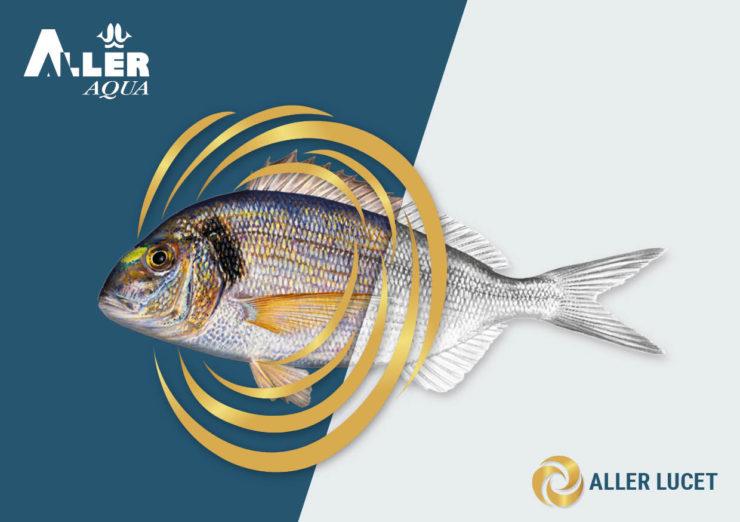 ALLER LUCET - an enhanced sea bream diet
