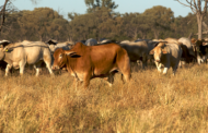 WA beef industry research to map carbon footprint