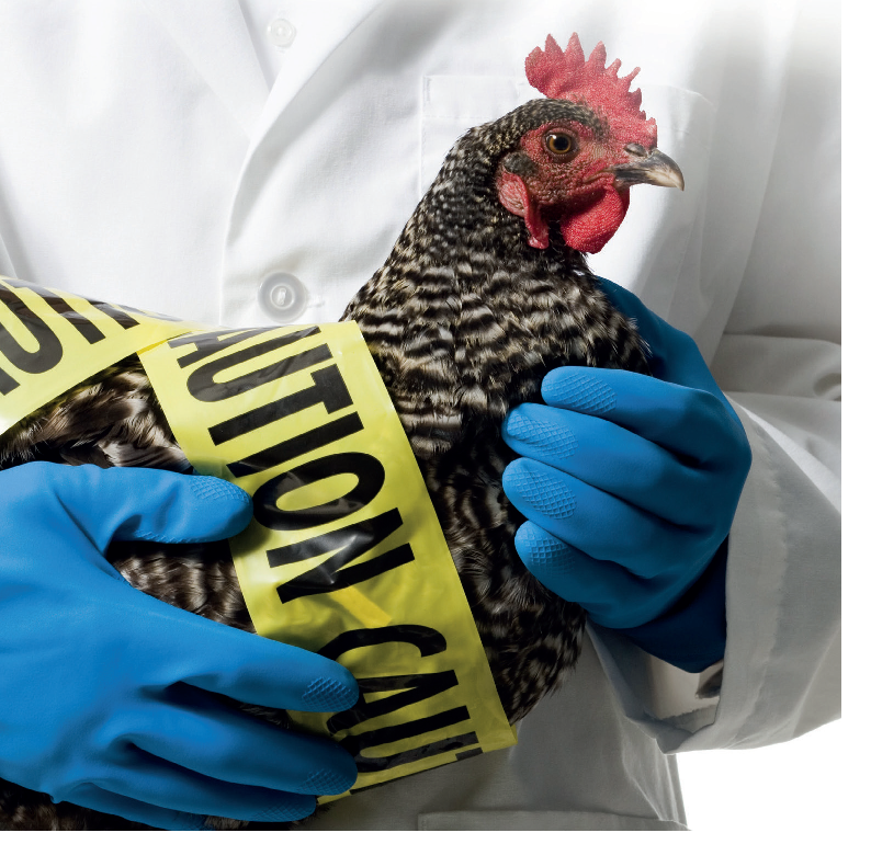 Virkon™ S and Virkon™ LSP kill Avian Influenza virus strains at economical dilution rates from as little as 25 seconds contact time!