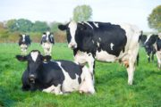 Big data empowers arla farmers to decarbonise dairy at a faster pace