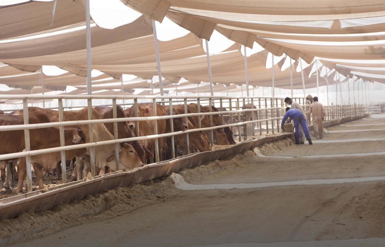 Minister of Climate Change and Environment Tours Trans Emirates Livestock Trading Company
