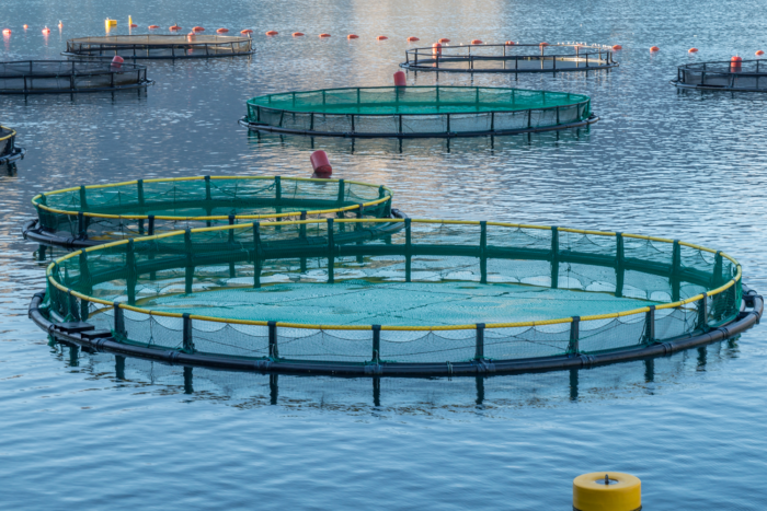 Nutreco invests in Proteon Pharmaceuticals to reduce the reliance on antibiotics within aquaculture and livestock farming