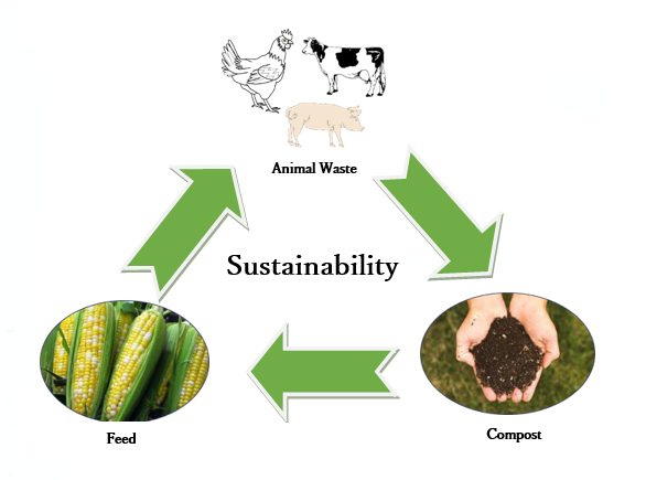 Importance of Composting and How it is done?