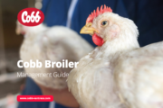 Expertise in New Cobb Broiler Management Guide Helps Unlock Flock Potential