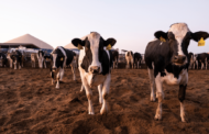 The truth behind livestock and climate change