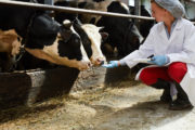 ICASA Awards Grants to Improve Antibiotics Use in Cattle